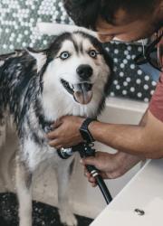 Happy dog getting washed