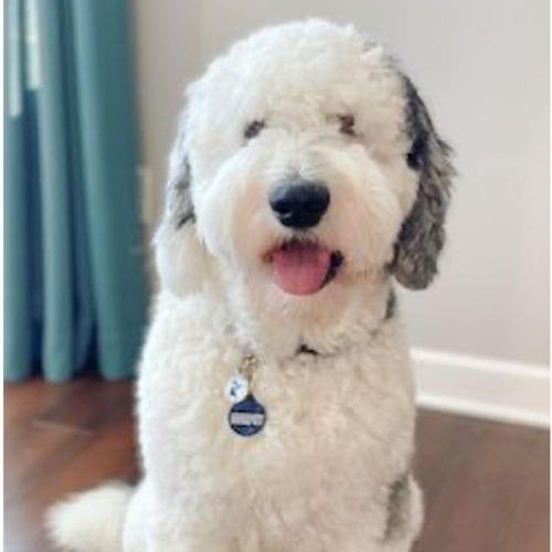 A dog brand ambassador